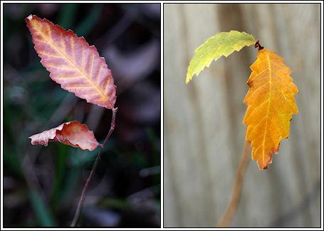 055-leaves-01.jpg