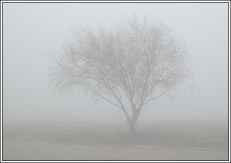 072-fog-01.jpg