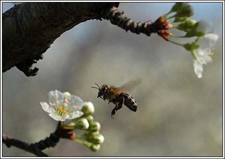 074-bees-01.jpg