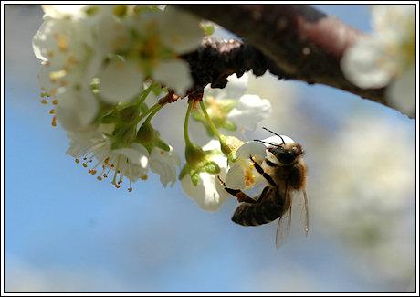 074-bees-02.jpg