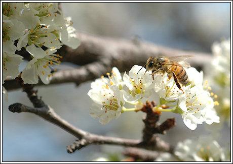 074-bees-03.jpg