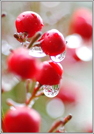 2009-014-ice-08