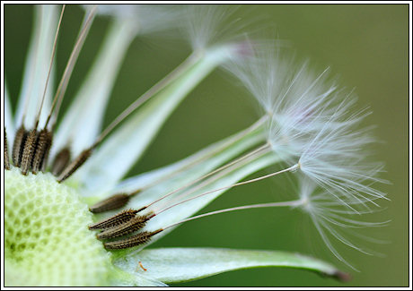 2009-059-funwithweeds-part2e