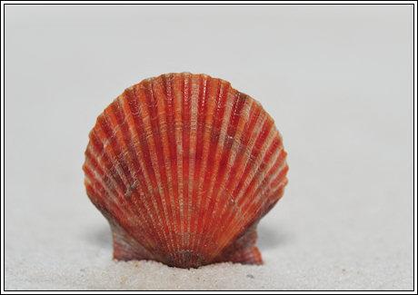 2014-055 e